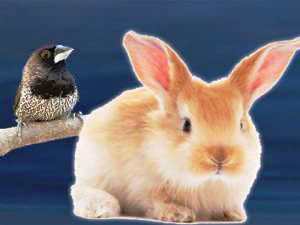 Little Rabbit e Pretty Sparrow